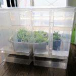 ベランダ野菜が育たなくなったのでお部屋温室をDIYしてみた