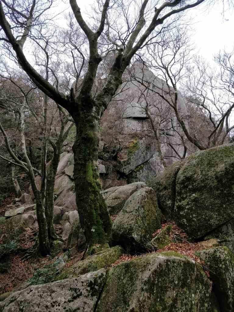 宝満山 岩