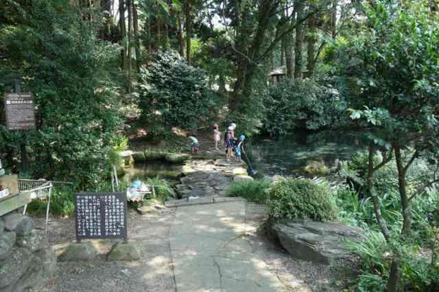 近所の子供たちが池に入って遊んでる