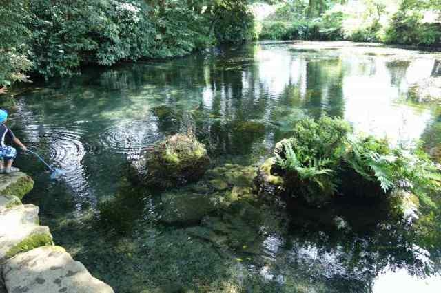 スゴクきれいな湧き水で鯉も映えてキレイ