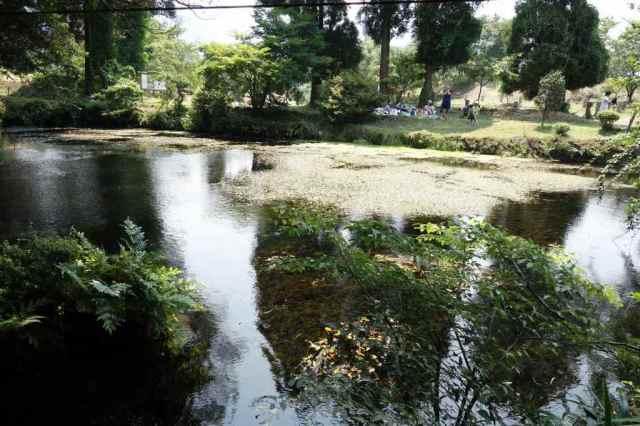 湧き水の奥の池は水中草が異様に繁殖している